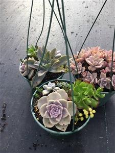3 x Assorted Succulent hangers