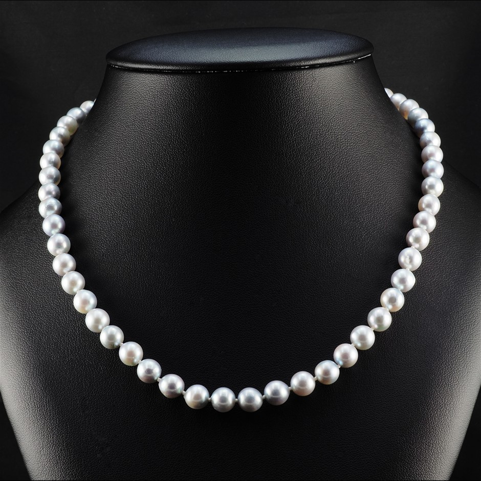 Natural grey Akoya Pearl Uniform Necklace 7.0 - 7.5mm