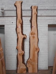 Double Pack - Deodar (Himalayan) Cedar
